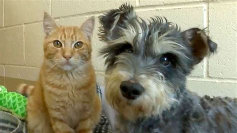 Meet Romeo the Cat and Juliet the Dog, Star-Crossed Lovers